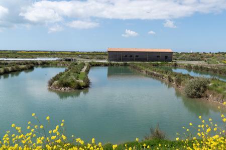 Countryside salt marsh of Ile de Re in France