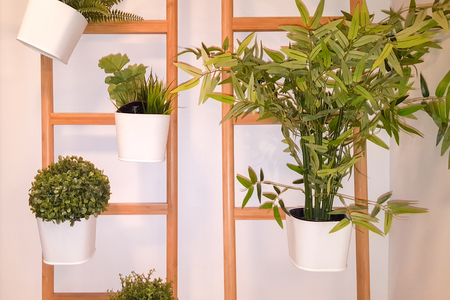 Various succulents plant in similar hanging pots by home wall