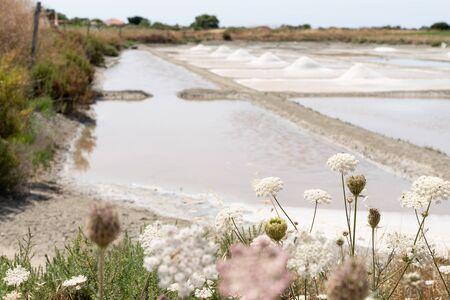 Traditional salt marsh of Noirmoutier island in salt harvest France Stok Fotoğraf