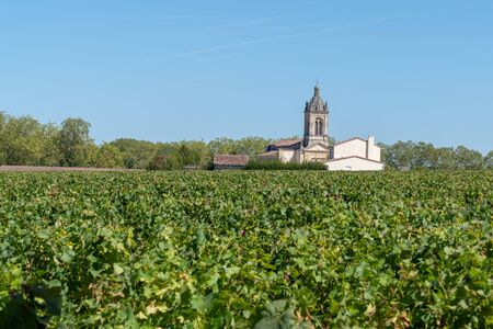 Vines from the village of Margaux in the Médoc Banque d'images