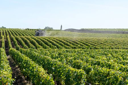 Vines agricultural chemical treatments in spring vineyard being processed in Chateau Margaux in Médoc France
