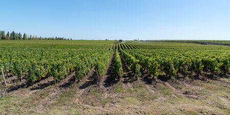 Chateau vineyard in Medoc Margaux in Bordeaux, France Stok Fotoğraf