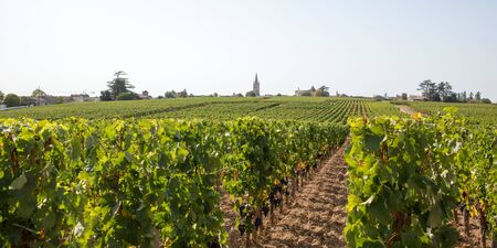 Vineyards of Saint Emilion Bordeaux Aquitaine region in France in a sunny summer day panorama web banner template header