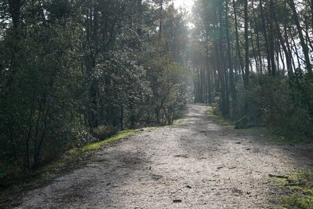 pathway for hiking in sunny day on wood winter pine forest season Foto de archivo
