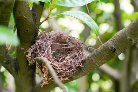 Bird nest empty in branch tree on spring green background blurred