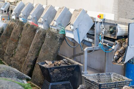 in farm oyster sorting machine by size ready to delivery and sall