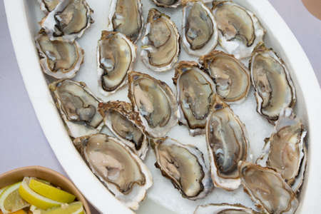 open fresh oysters in ice with lemon