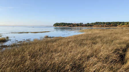 natural wild beach at claouey in Arcachon Bay France