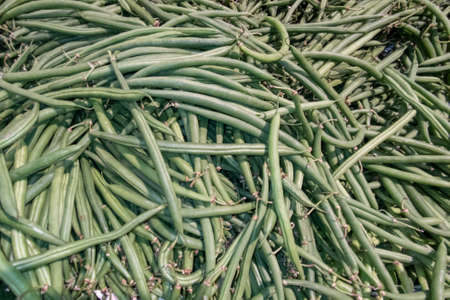 green french beans group background many bean vegetable organic food