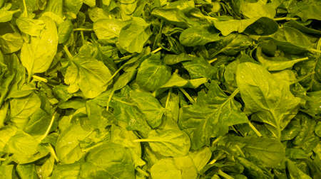 Spinach leafs green fresh vegetable plant background