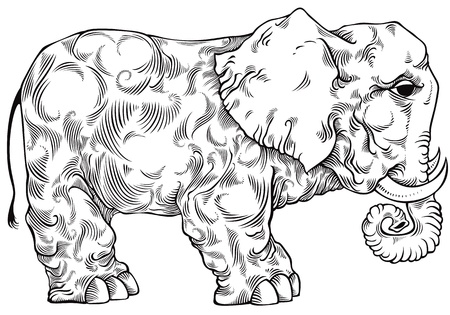 Elephant black and white drawing. Vector