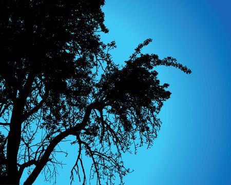 Tree over night sky, illustration. Stock Vector - 11594663
