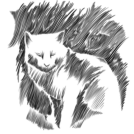Cat vector drawing. Vector
