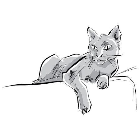 grey cat: Colored hand drawn cat, illustrated grey cat.