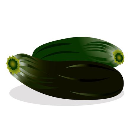 zucchini: Zucchini vector illustration.