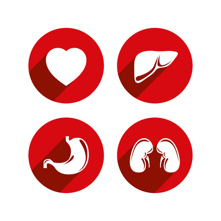 Human internal organs vector icons set. Vector