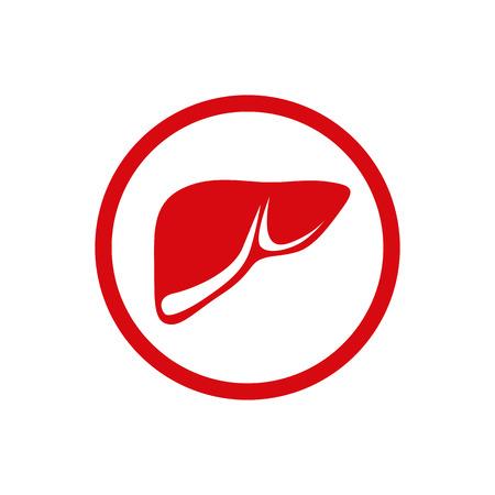 Illustration of the human internal liver. Vector