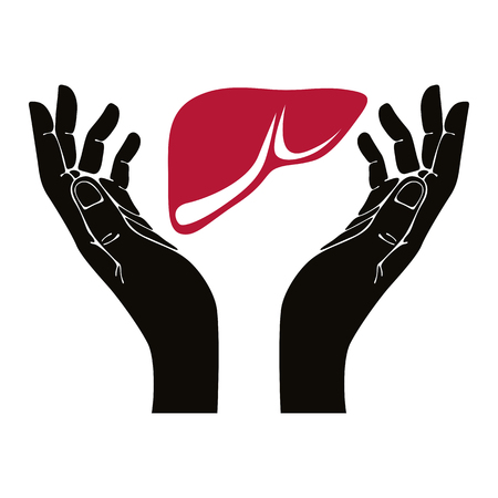 Hands with human liver vector symbol.