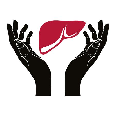 human liver: Manos con simbolo de h�gado humano. Vectores