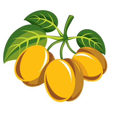sour: Harvesting symbol, single vector fruit isolated. Three yellow organic sour lemons with green leaves, healthy food idea design icon.