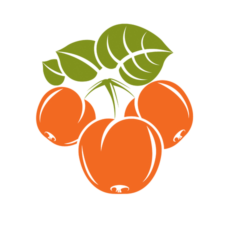 fertility emblem: Vegetarian organic food simple illustration, vector ripe sweet orange apricots with green leaves isolated on white. Whole fruits. Illustration