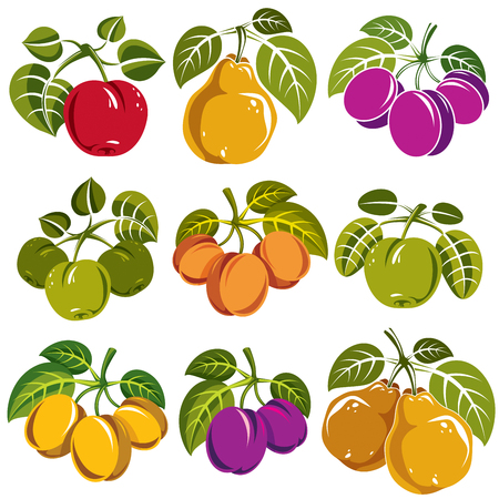 fruitful: Set of vector ripe fruits and berries with green leaves, fruity trees design elements isolated on white background.