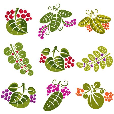tendrils: Set of vector green spring leaves with tendrils and different berries and seeds. Ecology theme design elements, gardening symbol. Natural icons set.