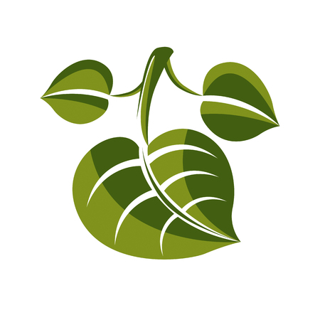 deciduous: Simple green deciduous vector tree leaf, stylized nature element. Ecology symbol, can be used in graphic design.