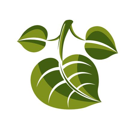 vert simple feuille d'arbre vecteur à feuilles caduques, élément de nature stylisée. symbole de l'écologie, peut être utilisé dans la conception graphique. Vecteurs