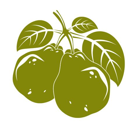 fruitful: Harvesting symbol, vector fruits isolated. Two organic sweet pears with green leaves, healthy food idea design icon.
