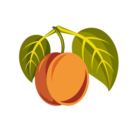 fruitful: Vegetarian organic food simple illustration, vector ripe orange peach with green leaves isolated on white. Whole fruit. Illustration