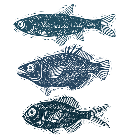 trout fishing: Set of vector fishes, different underwater species. Organic seafood graphic symbols collection, freshwater fishes, sea bass, sea bream and salmon.