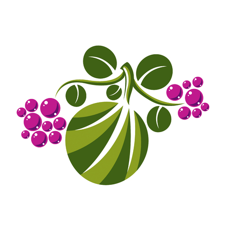 fruitful: Vector flat green leaf with tendrils and purple seeds. Herbal and botany symbol isolated on white background, spring season natural icon. Harvest idea design element. Illustration