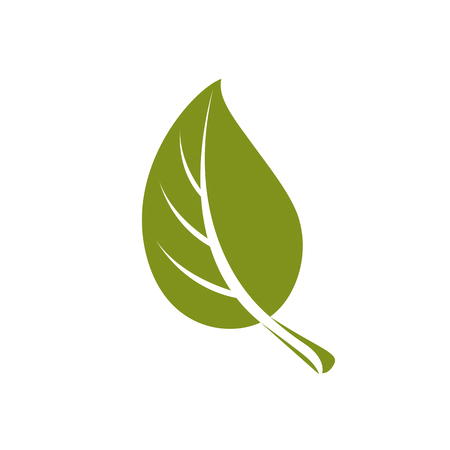 deciduous: Simple flat green deciduous vector tree leaf, stylized nature element. Ecology symbol, can be used in graphic design.