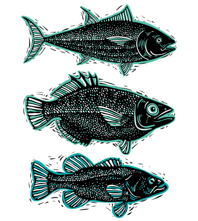 sea bass: Set of vector fishes, different underwater species. Organic seafood graphic symbols collection, freshwater fishes, sea bass, sea bream and salmon.