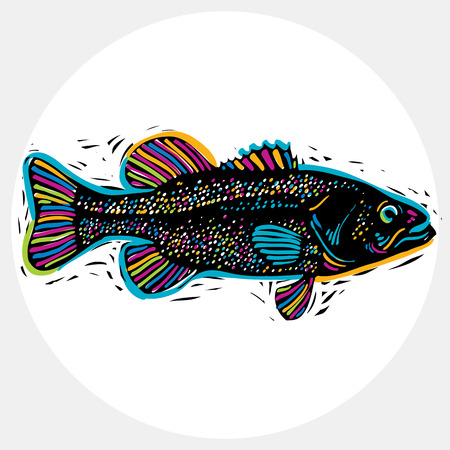 freshwater: Vector drawing of freshwater fish with fins, underwater life illustration. Organic seafood graphic symbol isolated on white. Illustration