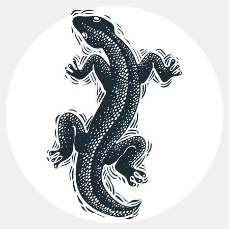 zoology: Vector drawn lizard silhouette, nature graphic symbol. Reptile top view illustration, rain forest fauna and wildlife zoology species. Illustration