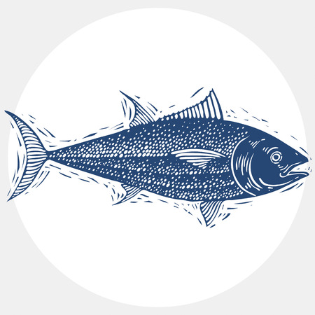 simple fish: Hand drawn vector simple fish isolated, seafood graphic element. Underwater life, illustration of single fish.