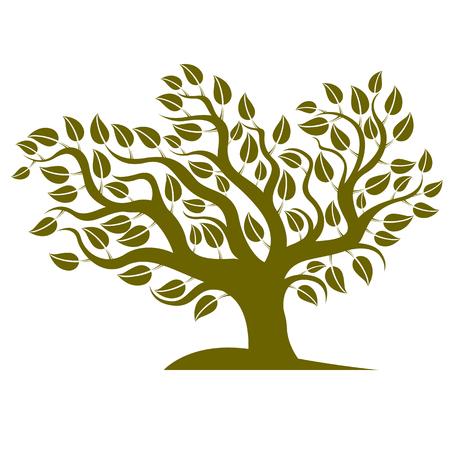 genealogy tree: Vector illustration of stylized branchy tree isolated on white background. Ecology conservation theme image.