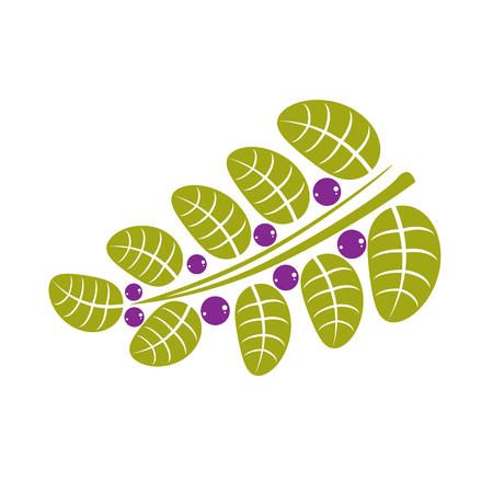be green: Simple green deciduous vector tree leaf with purple seeds, stylized nature element. Ecology symbol, can be used in graphic design.