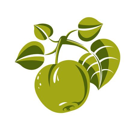 illustration: Single green simple vector apple with leaves, ripe sweet fruit illustration. Healthy and organic food, harvest season symbol.
