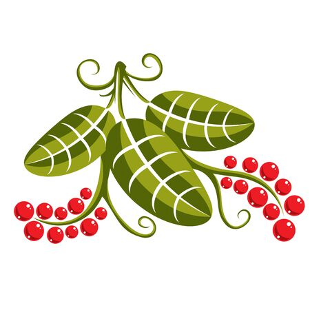 tendrils: Single vector flat green leaf with tendrils and red seeds. Herbal and botany symbol, spring season natural icon isolated on white background. Ecology conservation theme design element. Illustration