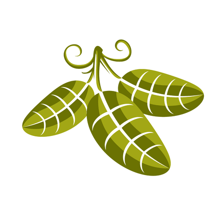 tendrils: Spring leaf with tendrils simple vector icon, nature and gardening theme illustration. Stylized tree leaf, botany and vegetarian design element.