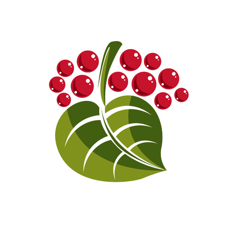 fruitful: Simple green deciduous vector tree leaf with red seeds, stylized nature element. Ecology symbol, can be used in graphic design.
