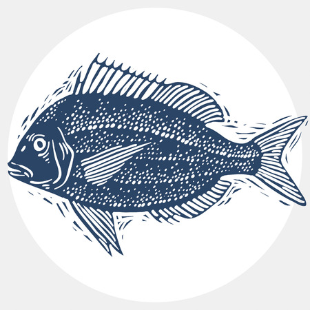 sea bream: Vector drawn freshwater fish silhouette, natural graphic symbol. Fauna and wildlife element, zoology species. Illustration