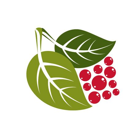 fruitful: Two simple flat green deciduous vector tree leaves with red berries or seeds, stylized nature element. Ecology symbol, can be used in graphic design.