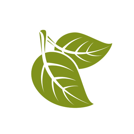 aspen leaf: Two vector flat green leaves isolated on white background. Herbal and botany symbol, spring season natural icon. Illustration