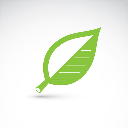 beech: Hand-drawn illustration of simple beech tree leaf isolated. Green foliage, spring herb. Vector botanical symbol can be used as design element in ecology conservation theme.