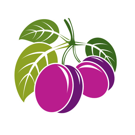 fruitful: Two purple simple vector plums with green leaves, ripe sweet fruits illustration. Healthy and organic food, harvest season symbol. Illustration