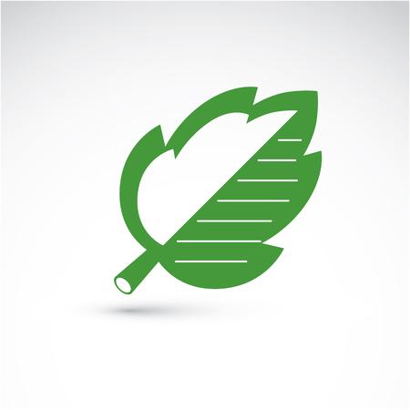 albero nocciola: Illustrazione vettoriale di foglia verde nocciolo isolato su sfondo bianco. Semplice elemento naturale disegno dissipato, simbolo grafico realizzato in tema di ecologia. Vettoriali
